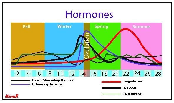woman orgasm hormones porn movie