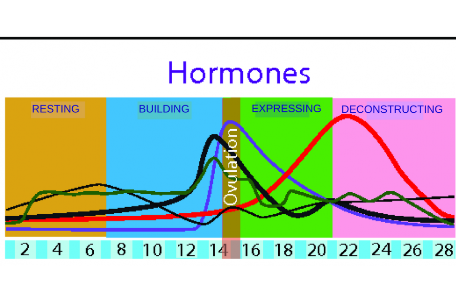 hormone chart by 4 seasons in 4 weeks
